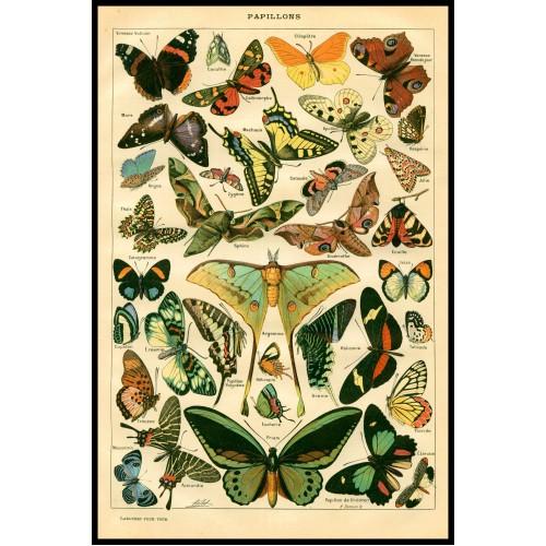 BUTTERFLIES (Papillons) Circa 1897