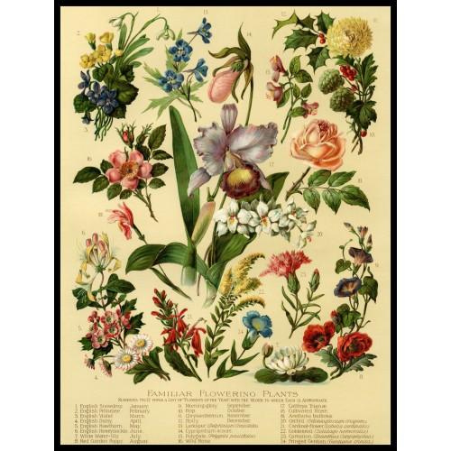 FLOWERS Circa 1906