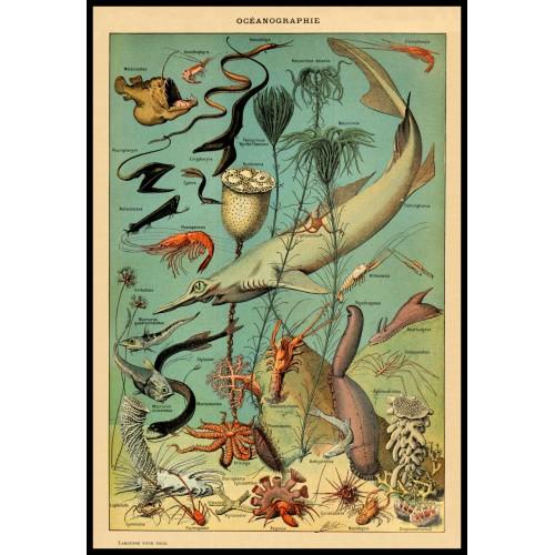 OCEANOGRAPHY (Oceanographie) Circa 1897